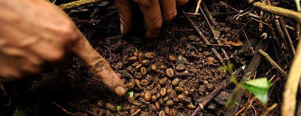 Кофейные плантации Вьетнама
