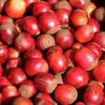 Сорт кофе либерика