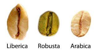 Зерна робусты, либерики и арабики